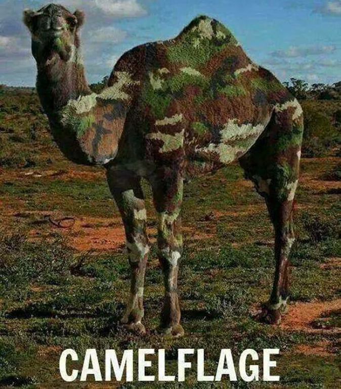 camelflage1